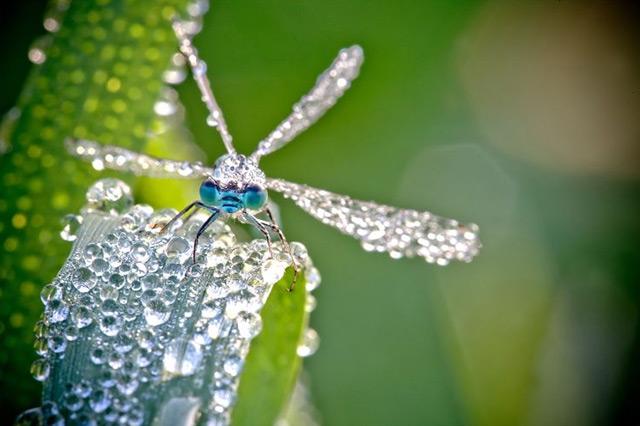 dragonfly-2-david-chambon.jpg