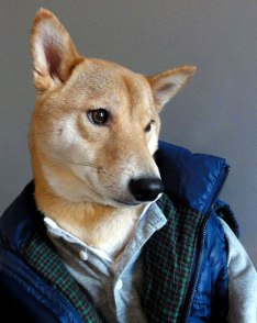 Menswear Dog 1