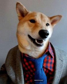 Menswear Dog 2