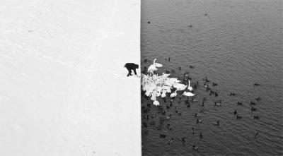 Swans in the snow - Marcin Ryczek