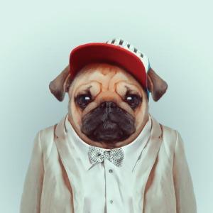 Yago Partal - Zoo Portraits (Pug)