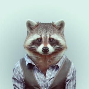 Yago Partal - Zoo Portraits (Racoon)