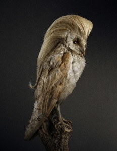 Coiffure le Bird - Rene Mesman (Owl)
