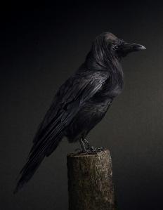 Coiffure le Bird - Rene Mesman (Raven)
