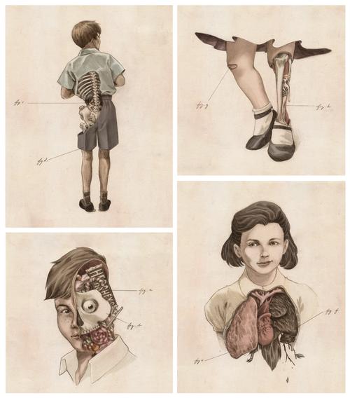 Anatomy - Yasmin Liang