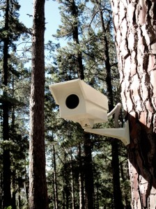 Security camera bird house - Porky Hefer Design