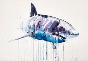 Shark - David White