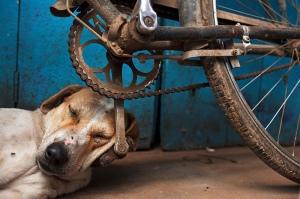 Maciej Dakowicz  - Varanasi, India (Cycle)