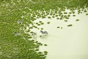 Zack Seckler - Botswana Bath