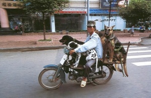 Bikes of Burden - Hans Kemp (Dogs)
