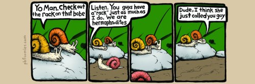 Perry Bible Fellowship -Snail Harassment