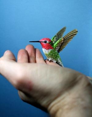 bird-new-1