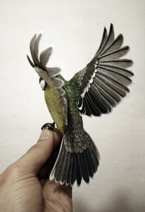 bird-new-4