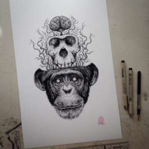 Chimp-Skull-Extraction - Paul Jackson