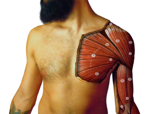Anatomy ody Paint (shoulder) - Danny Quirk & Immaculate Dissection