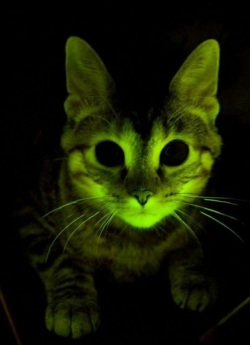 bioluminescent-cat